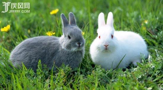 史上最可爱的兔子
