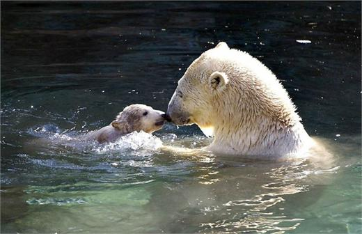 也不禁感叹:动物世界里的母爱一样伟大