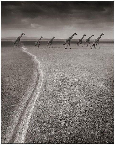 黑白的非洲动物摄影 |
